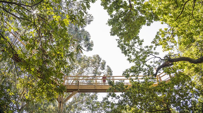 Treetop walk | Premis FAD 2020 | Ciudad y Paisaje